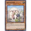 Boycotton