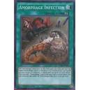 Amorphage Infection